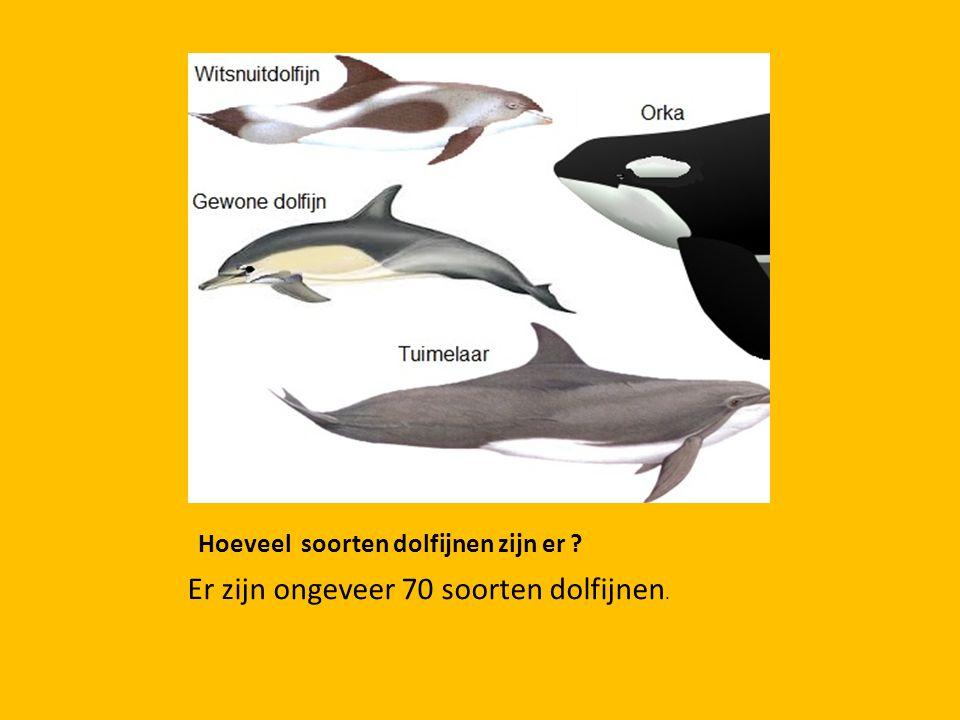 Hoeveel soorten dolfijnen zijn er ? Er zijn ongeveer 70 soorten dolfijnen.
