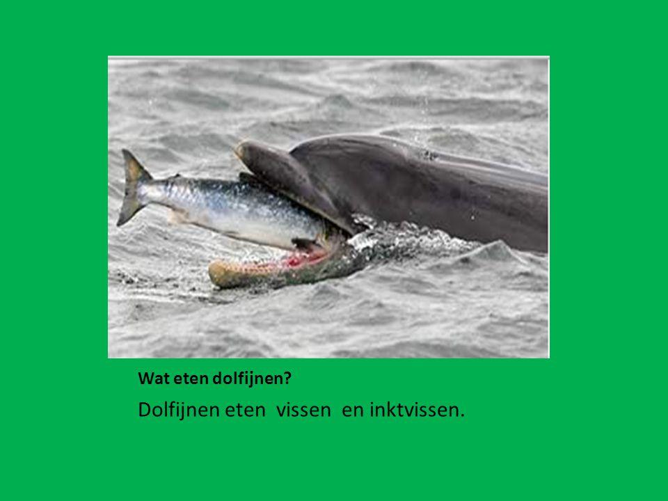 Wat eten dolfijnen? Dolfijnen eten vissen en inktvissen.