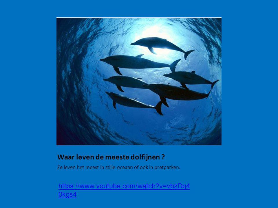 Waar leven de meeste dolfijnen ? Ze leven het meest in stille oceaan of ook in pretparken. https://www.youtube.com/watch?v=vbzDq4 0kgs4