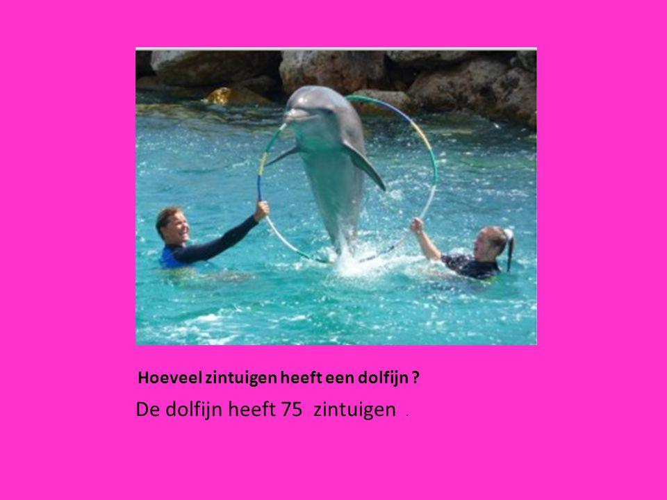 Hoeveel zintuigen heeft een dolfijn ? De dolfijn heeft 75 zintuigen.