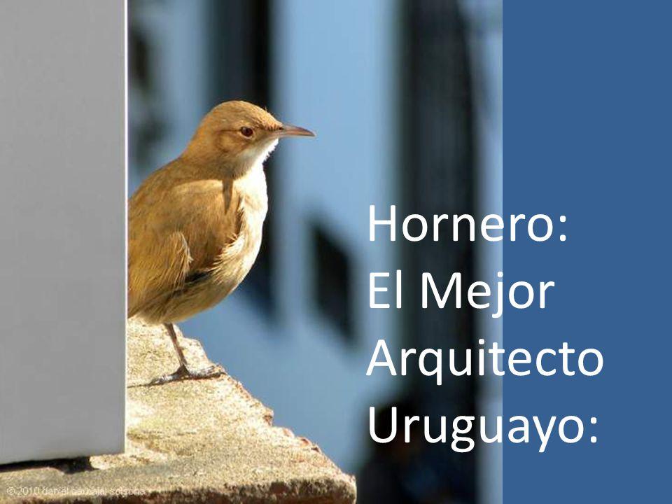 In Uruguay hebben we overal Horneros nesten, was deze eigenaardigheid nest gebouwd op een raam in het gebouw waar ik woon.