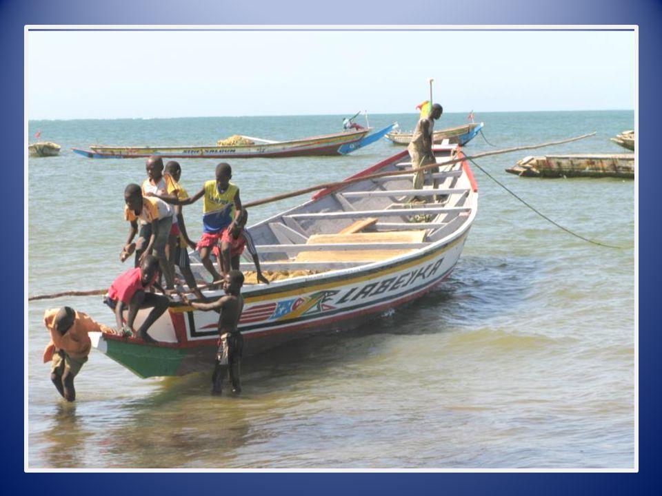 Gambia 6 Foto's en Presentatie - Meta De Visindustrie (naar Afrikaanse norm)