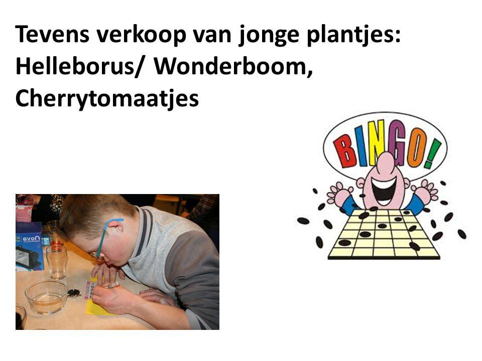 Tevens verkoop van jonge plantjes: Helleborus/ Wonderboom, Cherrytomaatjes
