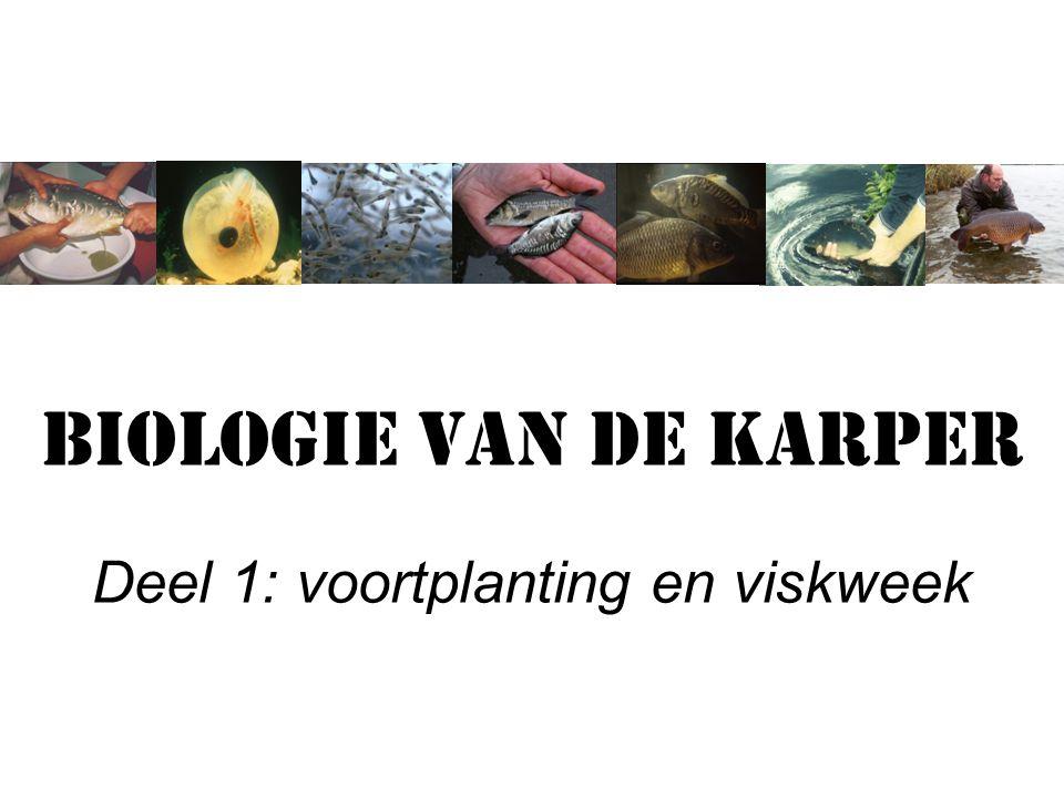 Biologie van de karper Deel 1: voortplanting en viskweek