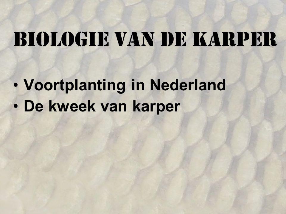 Voortplanting in Nederland De kweek van karper Biologie van de karper