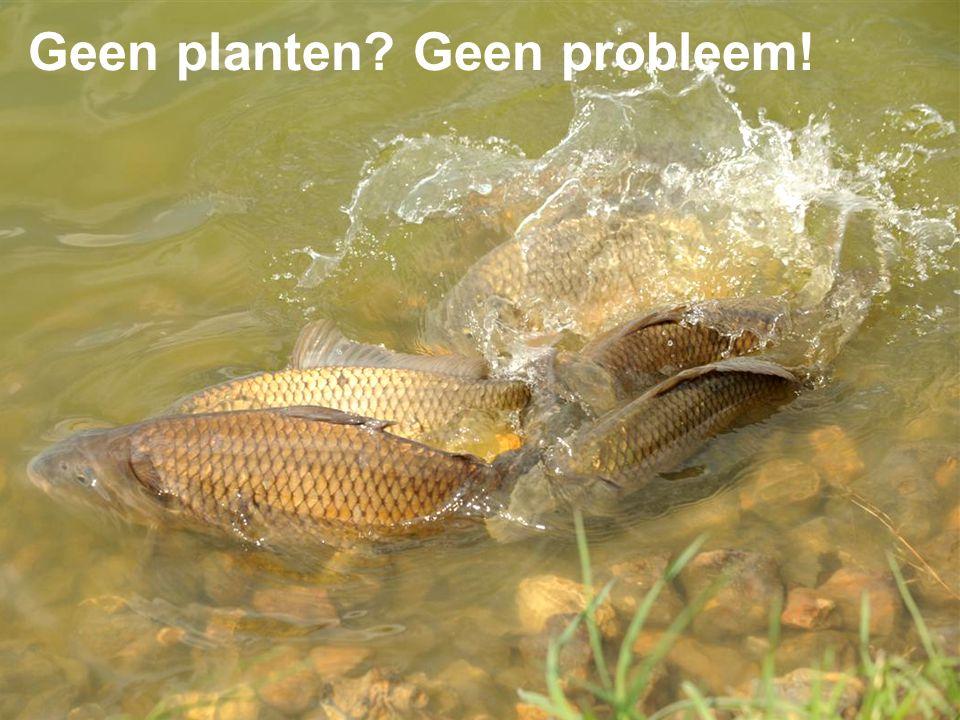 Geen planten? Geen probleem!
