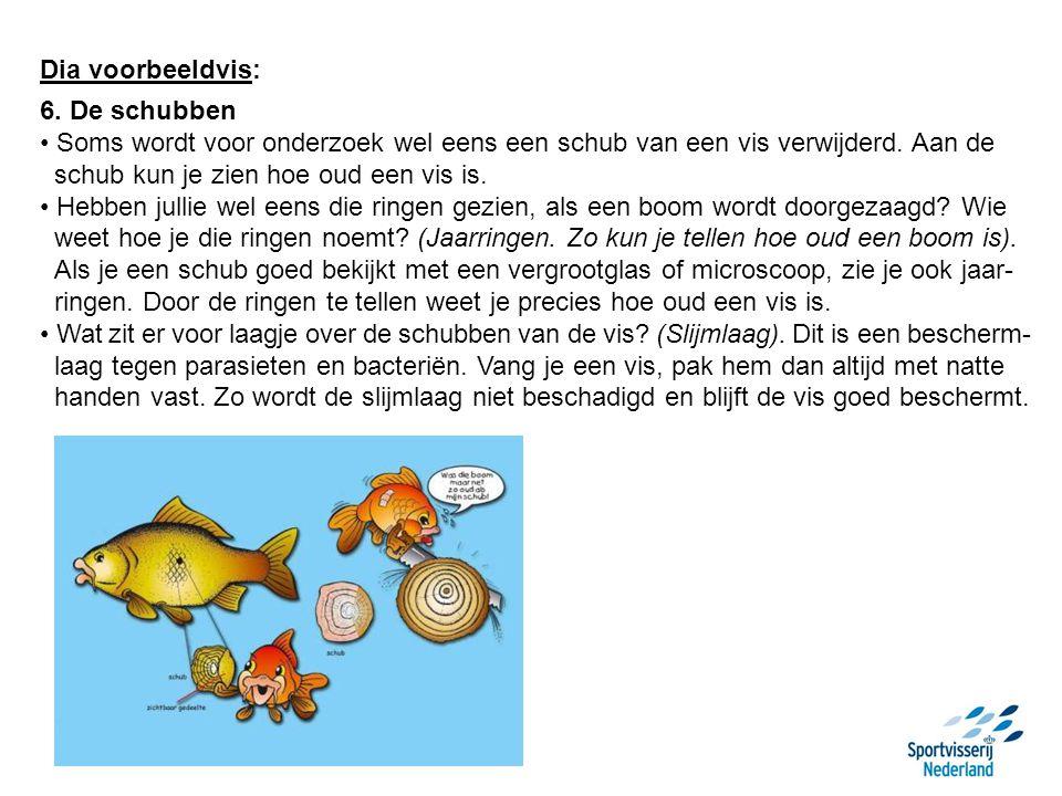 Dia voorbeeldvis: 6. De schubben Soms wordt voor onderzoek wel eens een schub van een vis verwijderd. Aan de schub kun je zien hoe oud een vis is. Heb