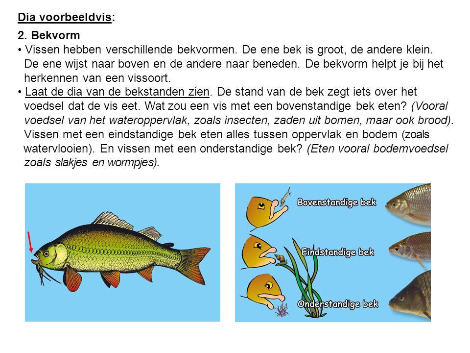 Dia voorbeeldvis: 2. Bekvorm Vissen hebben verschillende bekvormen. De ene bek is groot, de andere klein. De ene wijst naar boven en de andere naar be