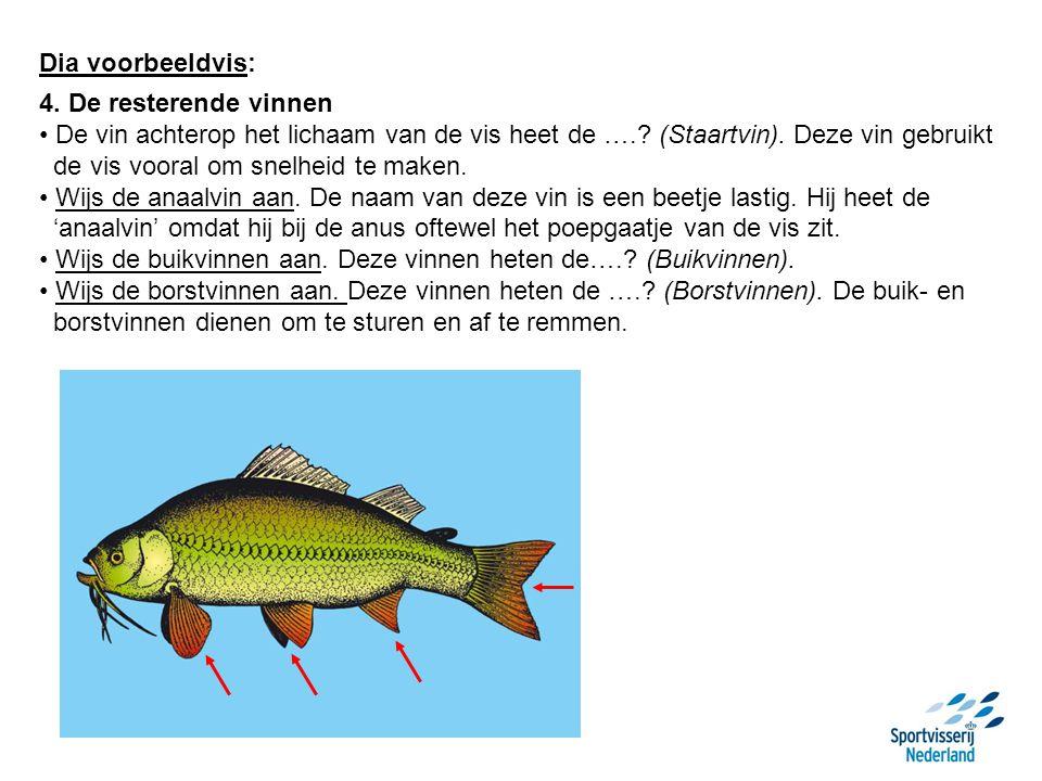 Dia voorbeeldvis: 5.De zijlijn Vissen zijn bedekt met schubben.