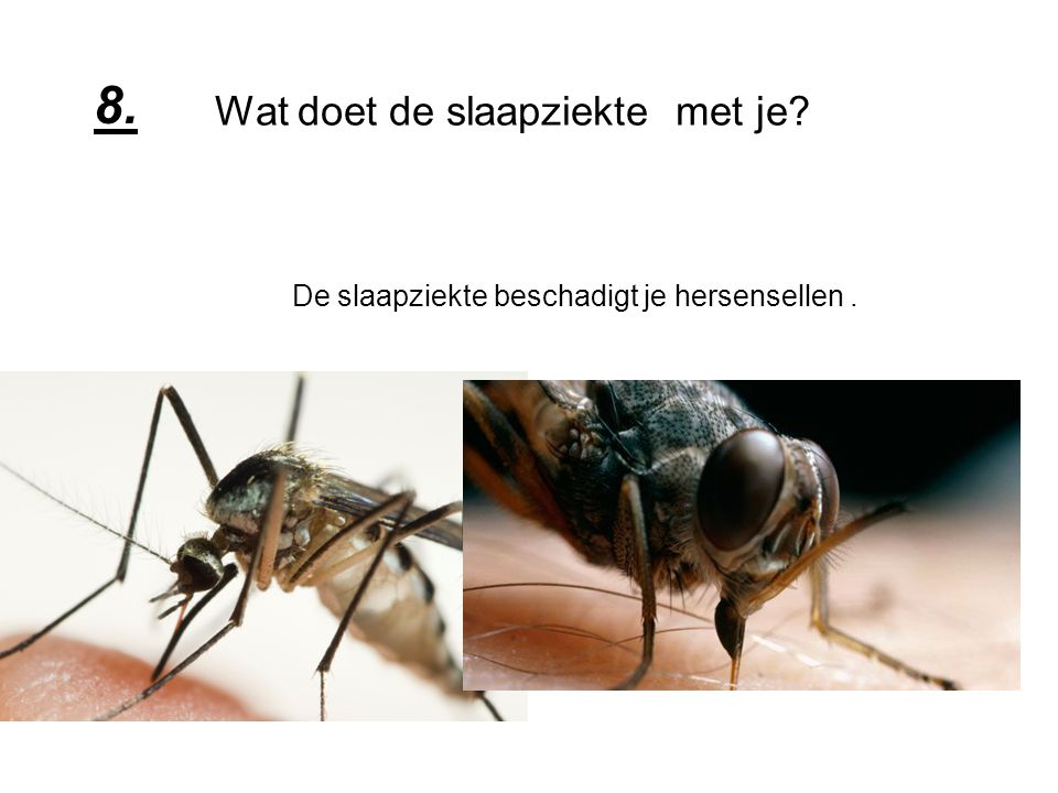 Wat doet malaria.Malaria tast het bloed aan en veroorzaakt koorts.