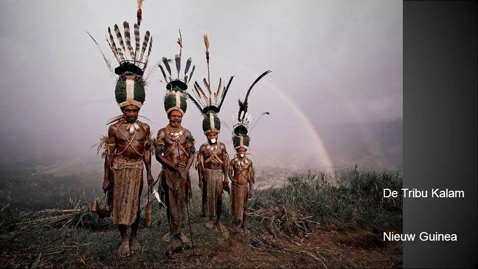 De Tribu Papua Nieuw Guinea
