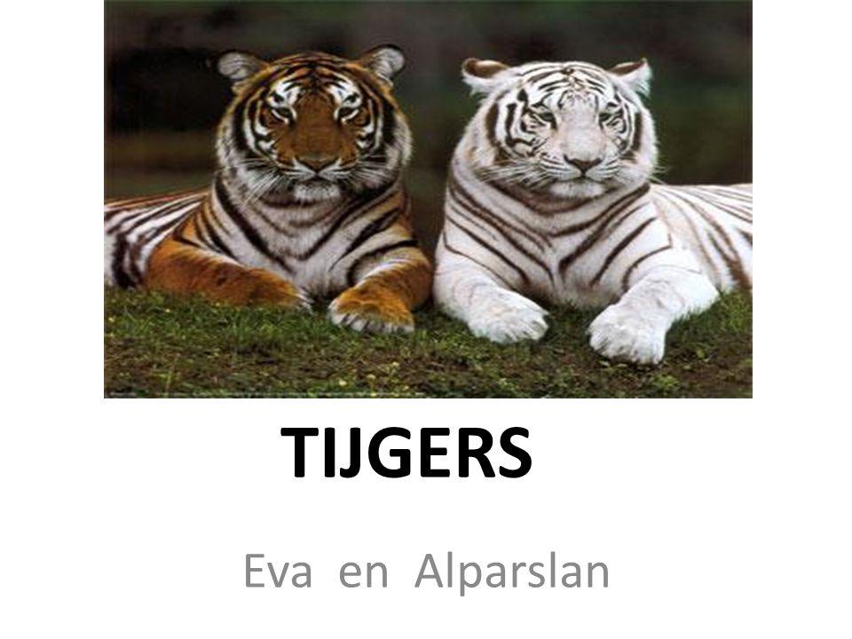 TIJGERS Eva en Alparslan