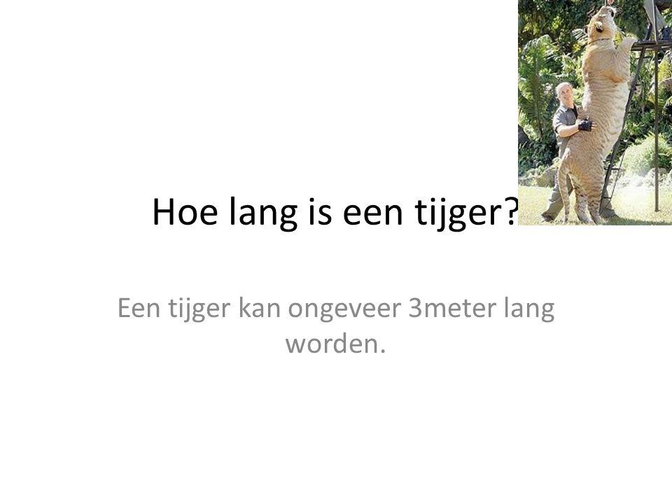 Hoe lang is een tijger? Een tijger kan ongeveer 3meter lang worden.