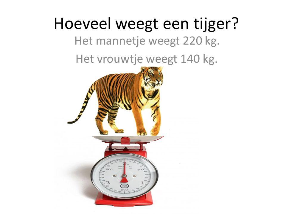 Hoeveel weegt een tijger? Het mannetje weegt 220 kg. Het vrouwtje weegt 140 kg.