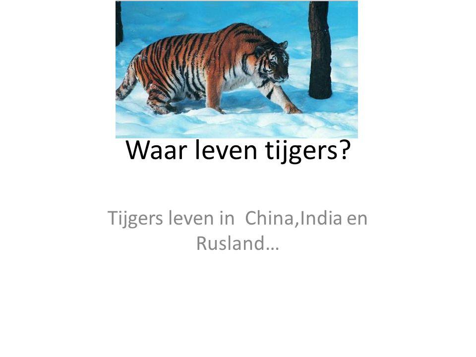 Waar leven tijgers? Tijgers leven in China,India en Rusland…