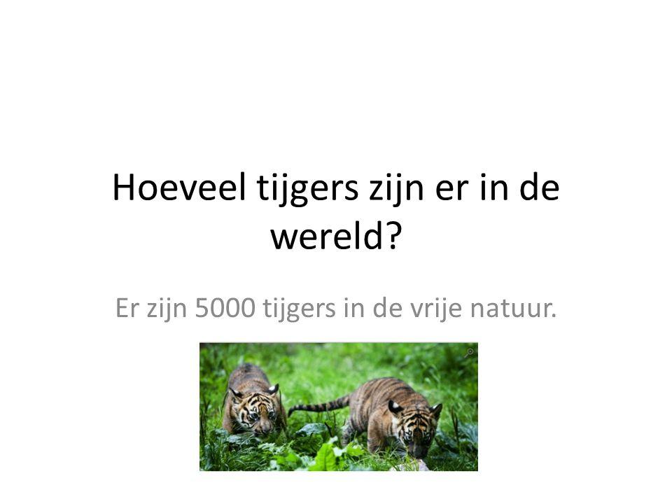 Hoeveel tijgers zijn er in de wereld? Er zijn 5000 tijgers in de vrije natuur.