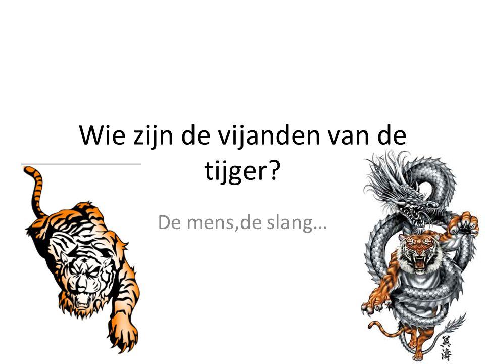 Wie zijn de vijanden van de tijger? De mens,de slang…