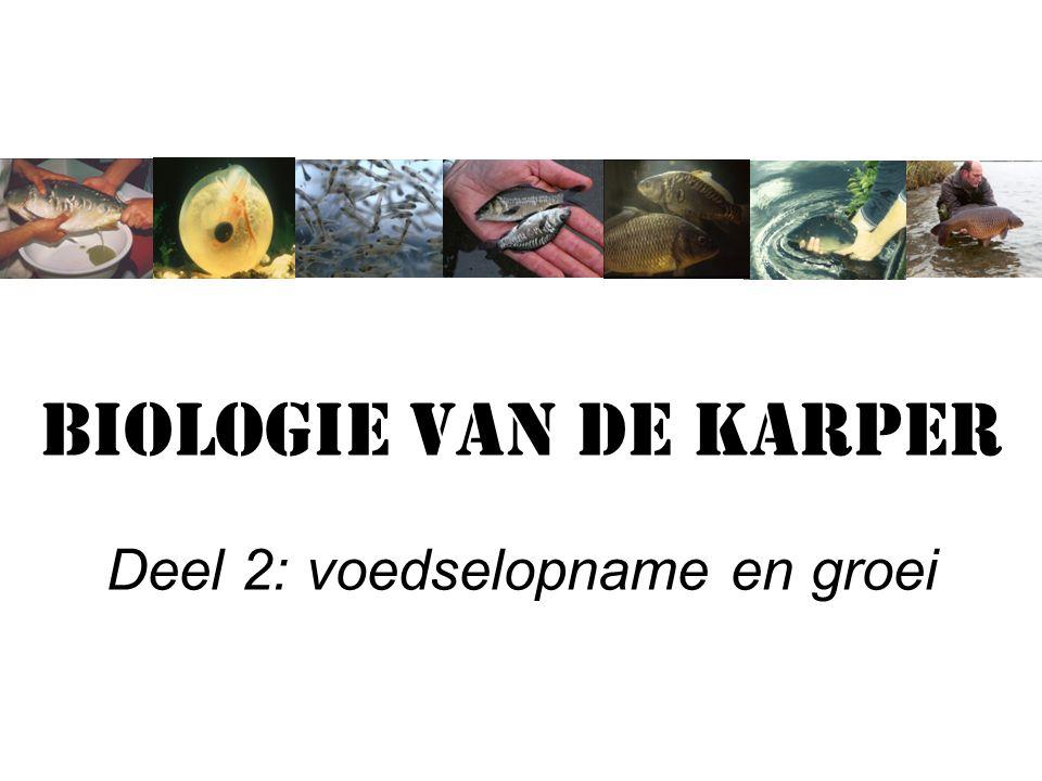 Biologie van de karper Deel 2: voedselopname en groei