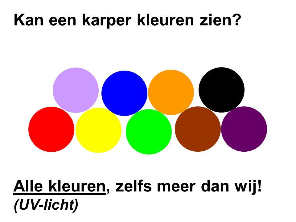 Alle kleuren, zelfs meer dan wij! (UV-licht)