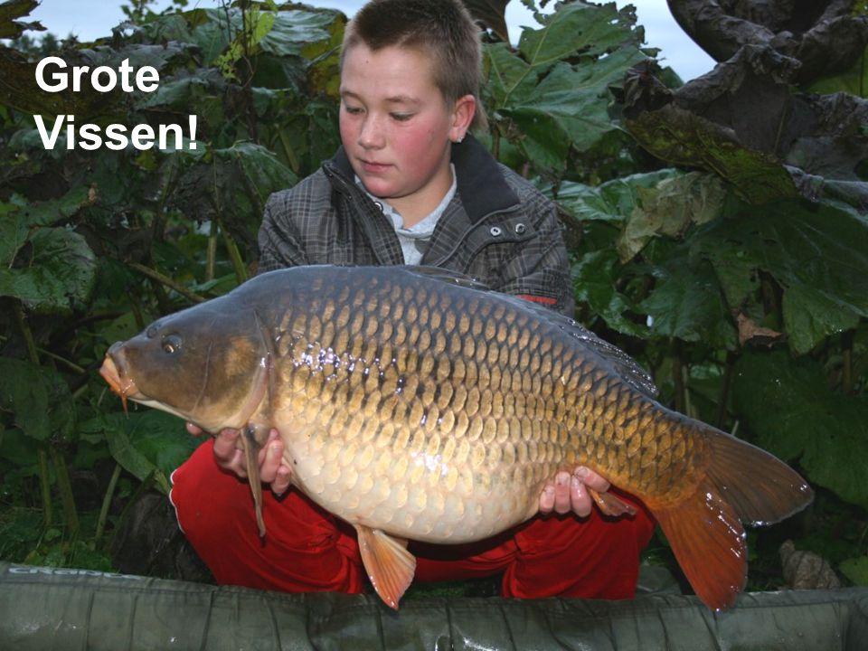 Grote Vissen!