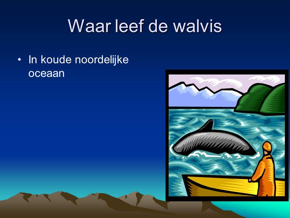Waar leef de walvis In koude noordelijke oceaan