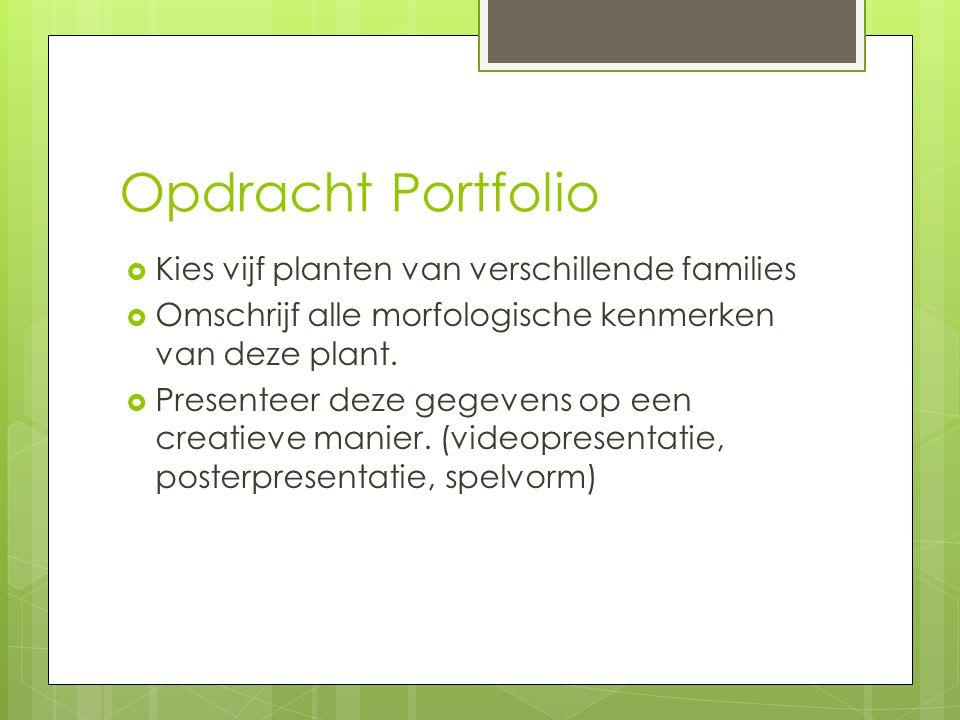 Opdracht Portfolio  Kies vijf planten van verschillende families  Omschrijf alle morfologische kenmerken van deze plant.  Presenteer deze gegevens