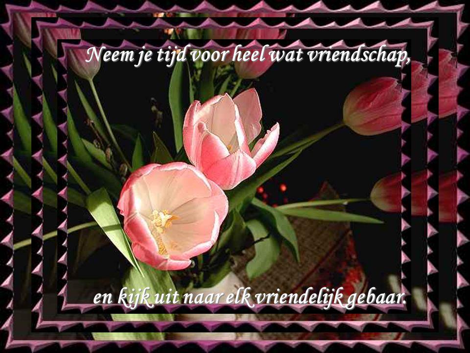 Neem je tijd voor heel wat vriendschap, en kijk uit naar elk vriendelijk gebaar.