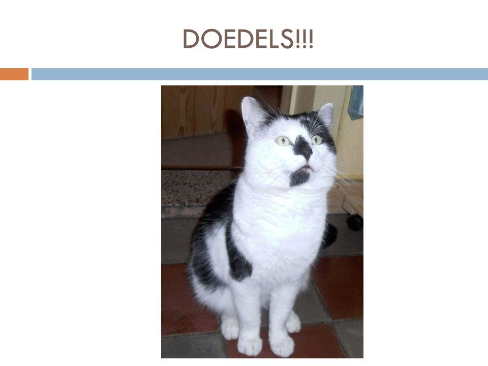 Als je meerdere vragen hebt of interesse kan je ons altijd contacteren via de mail: kattenclub@outlook.com Contacteer ons via…