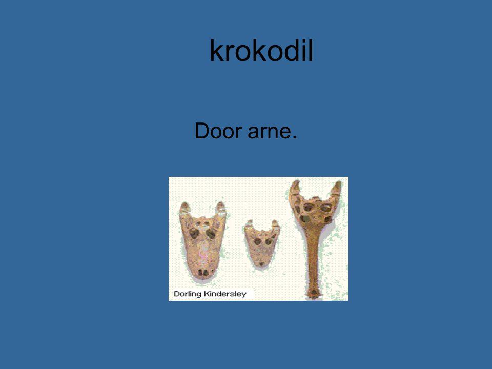 krokodil Door arne.