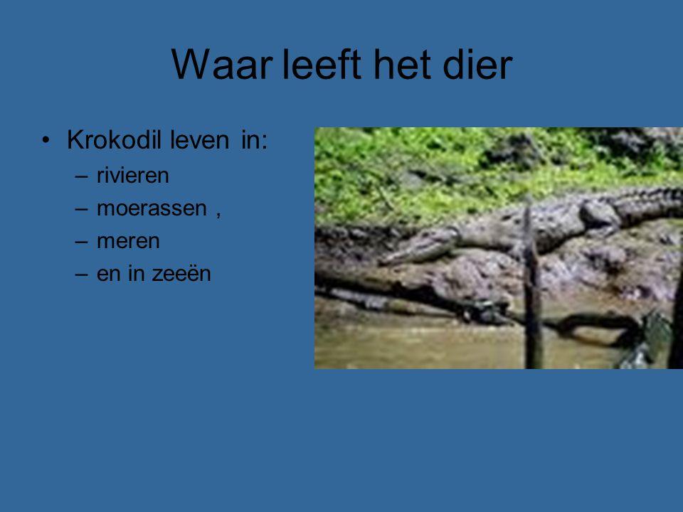 Waar leeft het dier Krokodil leven in: –rivieren –moerassen, –meren –en in zeeën