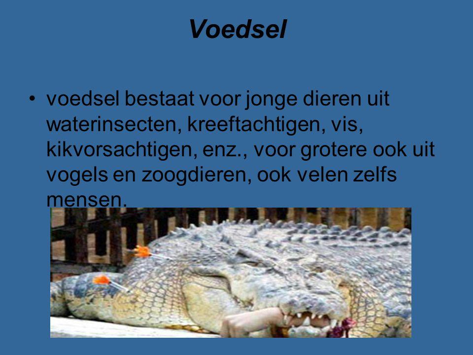 Voedsel voedsel bestaat voor jonge dieren uit waterinsecten, kreeftachtigen, vis, kikvorsachtigen, enz., voor grotere ook uit vogels en zoogdieren, oo