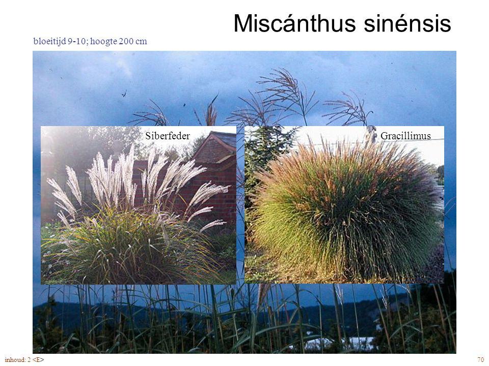Miscánthus sinénsis inhoud: 2 70 bloeitijd 9-10; hoogte 200 cm SiberfederGracillimus