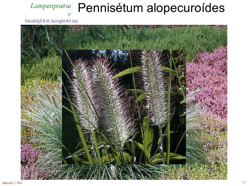 Pennisétum alopecuroídes inhoud: 2 75 bloeitijd 8-9; hoogte 60 cm Lampenpoetse r