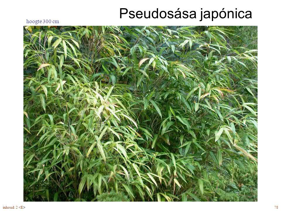 inhoud: 2 78 Pseudosása japónica hoogte 300 cm