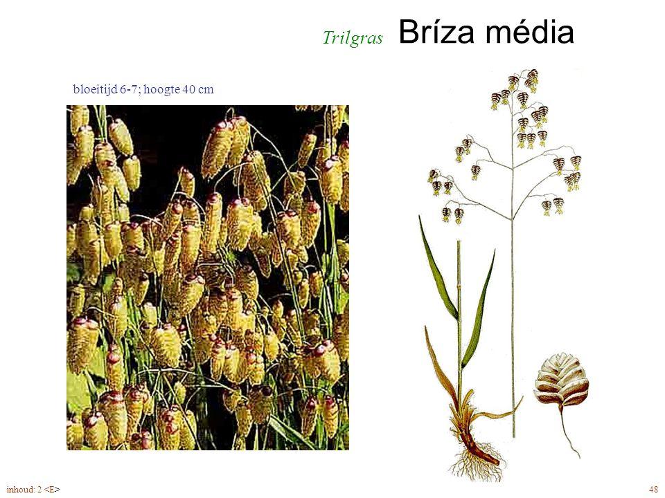 Bríza média inhoud: 2 48 bloeitijd 6-7; hoogte 40 cm Trilgras