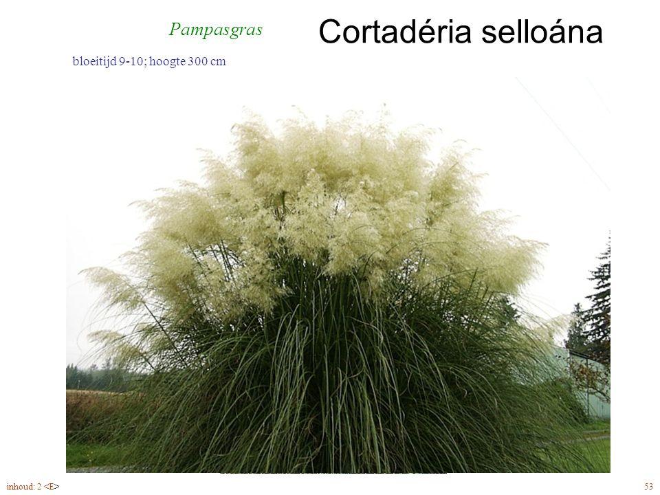 Cortadéria selloána inhoud: 2 53 bloeitijd 9-10; hoogte 300 cm Pampasgras
