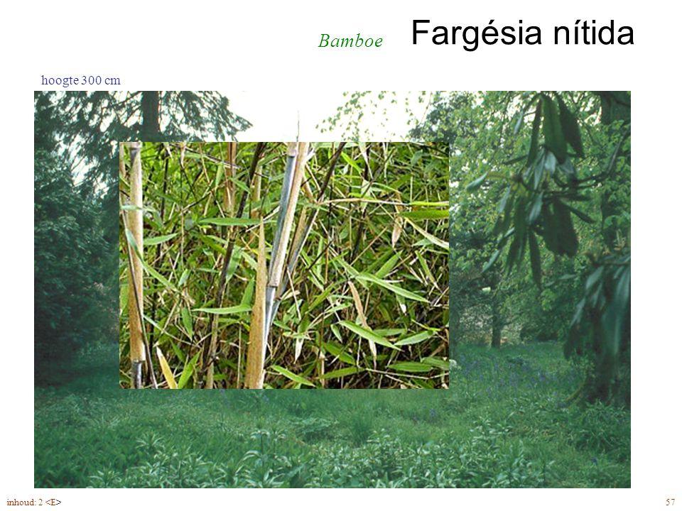 Fargésia nítida inhoud: 2 57 hoogte 300 cm Bamboe
