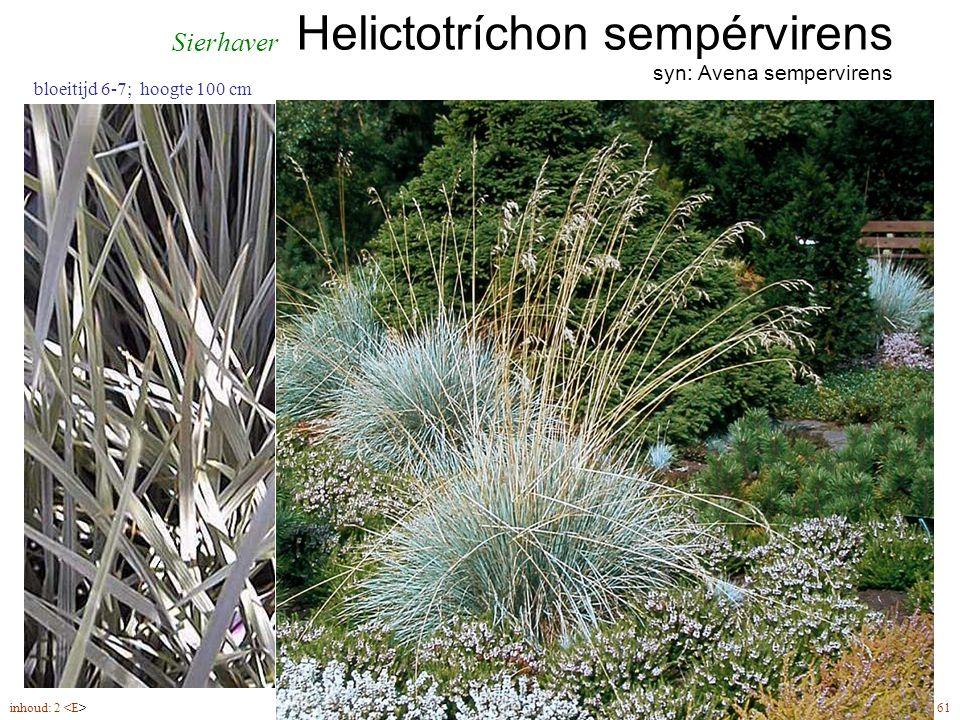 Helictotríchon sempérvirens syn: Avena sempervirens inhoud: 2 61 bloeitijd 6-7; hoogte 100 cm Sierhaver