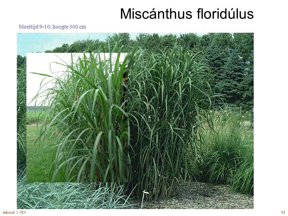 Miscánthus floridúlus inhoud: 2 68 bloeitijd 9-10; hoogte 300 cm