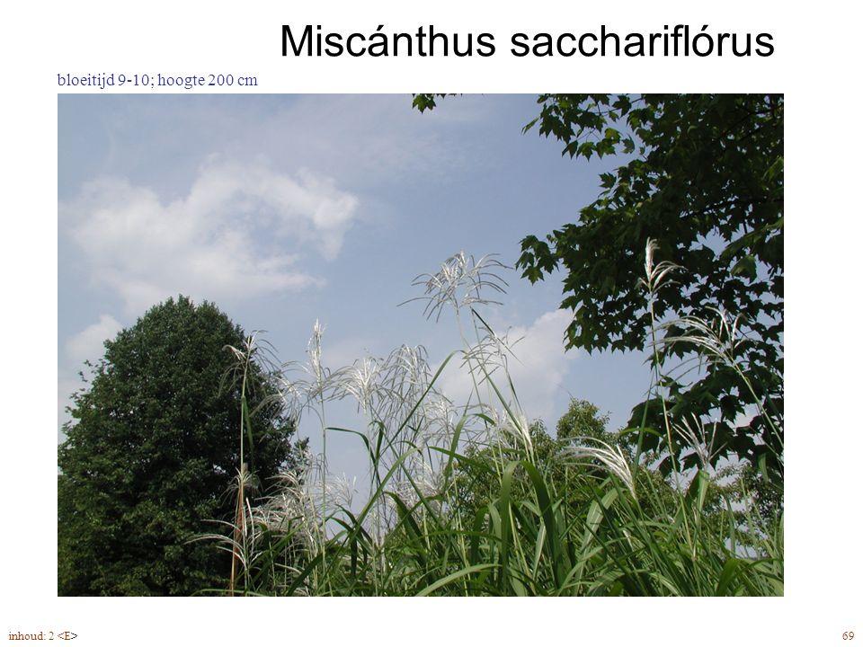 Miscánthus sacchariflórus inhoud: 2 69 bloeitijd 9-10; hoogte 200 cm