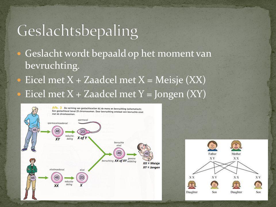 Geslacht wordt bepaald op het moment van bevruchting. Eicel met X + Zaadcel met X = Meisje (XX) Eicel met X + Zaadcel met Y = Jongen (XY)