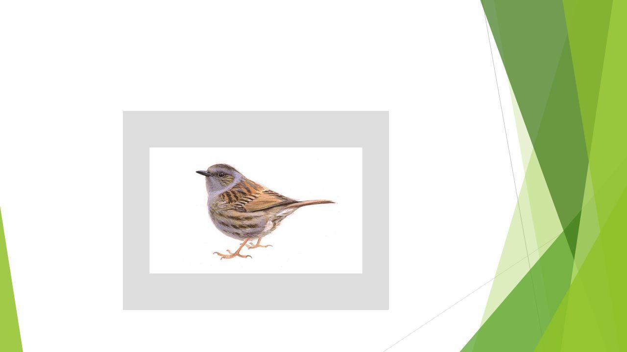  https://www.tuinvogeltelling.nl/ https://www.tuinvogeltelling.nl/
