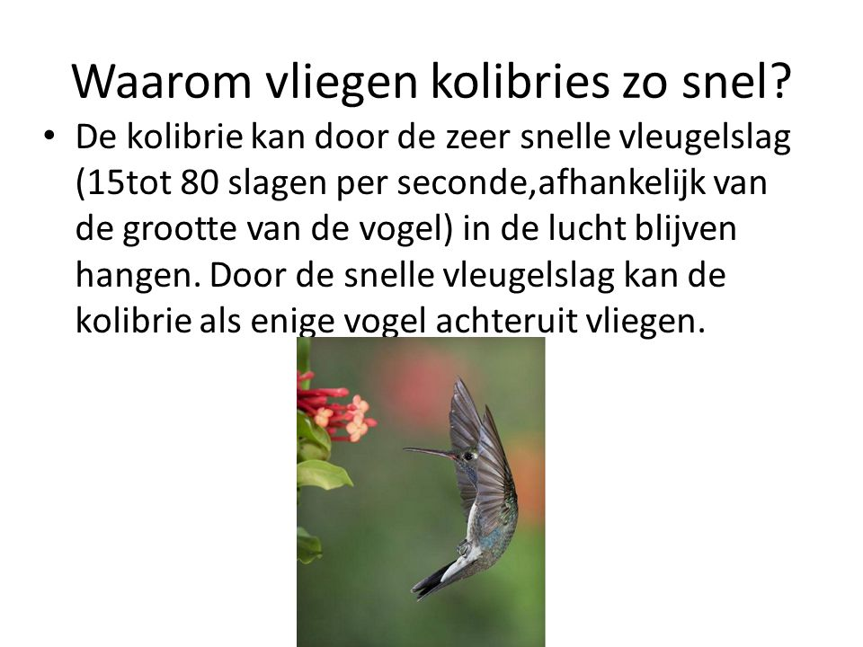Waarom vliegen kolibries zo snel? De kolibrie kan door de zeer snelle vleugelslag (15tot 80 slagen per seconde,afhankelijk van de grootte van de vogel