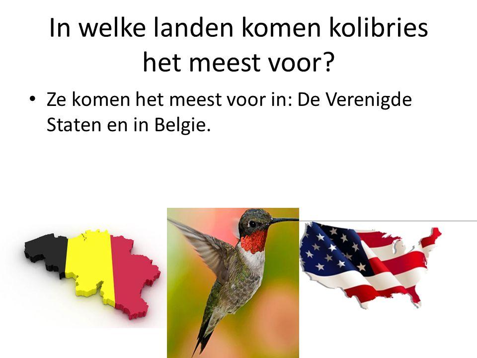 In welke landen komen kolibries het meest voor? Ze komen het meest voor in: De Verenigde Staten en in Belgie.