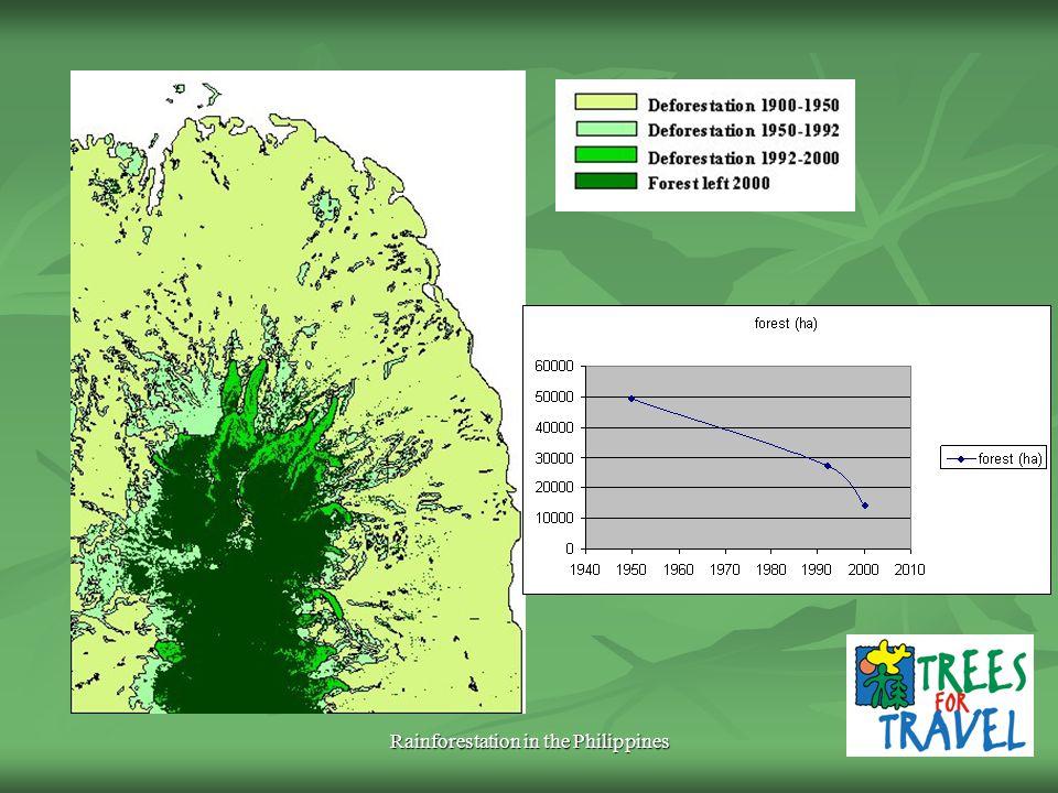 Rainforestation in the Philippines REDD?