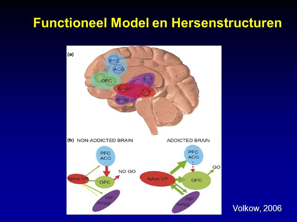 Functioneel Model en Hersenstructuren Volkow, 2006
