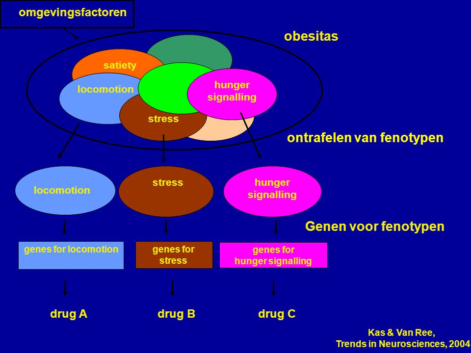 Genen voor fenotypen genes for stress genes for hunger signalling genes for locomotion omgevingsfactoren satiety locomotion stress hunger signalling o