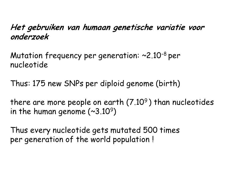 Het gebruiken van humaan genetische variatie voor onderzoek Mutation frequency per generation: ~2.10 -8 per nucleotide Thus: 175 new SNPs per diploid