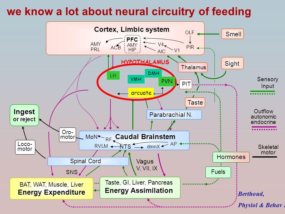 Parabrachial N. Caudal Brainstem Cortex, Limbic system Sight V1 V4 Smell OLF PIR ACB Thalamus PFC AMY HIP AIC Taste Sensory Input Outflow autonomic en