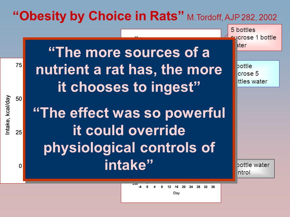 """Obesity by Choice in Rats"" M.Tordoff, AJP 282, 2002 5 bottles sucrose 1 bottle water 1 bottle sucrose 5 bottles water 1 bottle water control 99 kcal"